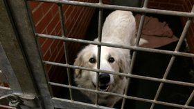 Útulek v Troji na Silvestra praská ve švech: Svážejí se tam zaběhnutí psi