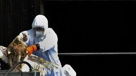 Ptačí chřipka se šíří republikou: Kvůli nakažené huse u Prahy utratí 700 zvířat