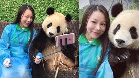 Pandastické: Černobílá šelma se naučila dokonalému pózování pro selfie