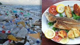 Delikatesa s chutí rakoviny. S mořskými plody sní lidé až 11 tisíc kusů plastů