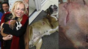 Havlová popsala útok obrovské dogy a ukázala šokující fotky: Panička v norkovém kožíšku jen zírala