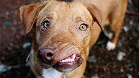 Je tak ošklivý, až je roztomilý! Pes s křivou tlamou je hvězdou internetu