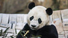 Tisíce lidí v Číně se musí přestěhovat. Je potřeba uvolnit místo pro pandy