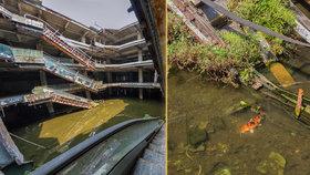 Příroda porazila developery: Z opuštěného obchoďáku se stalo akvárko s tisíci rybami!