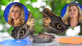 Machálková a Pizingerová popíjely za bílého dne. Zahájily výstavu motýlů v botanické