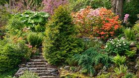 Skalničkářský ráj v Prokopském údolí se opět otevírá. Vzácné rostliny jim závidí pěstitelé z celého světa
