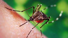 Nechcete štípance a nemoci od komárů? Stačí rozpustit cukr, naznačila studie