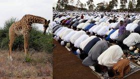 Kdo nebyl muslim, zemřel. V turistické části Keni sťali islamisté devět lidí
