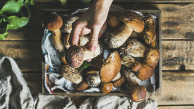 Víme, kde rostou! Kam vyrazit na houby a nepřijít s prázdnou?