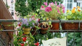 """""""Balkon k nakousnutí"""" v Libni: Komunitní zahrada poradí, jak na malou zahrádku"""