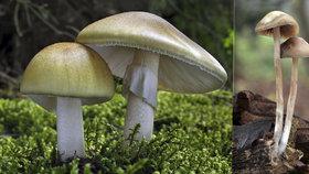 """Selhání ledvin, poškození jater i smrt: Jak rychle vás """"dostanou"""" jedovaté houby?"""