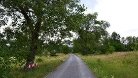Lepší svezení pro cyklisty, bruslaře i kočárky: Stezku na Rohanském ostrově vyasfaltují