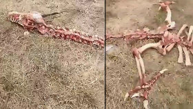 Vesničané objevili kostru draka. Měří 18 metrů a má děsivé rohy
