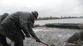 V Praze začal podzimní výlov rybníků. Vodní plochy se s předstihem vypouštějí