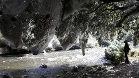 Les ovládli pavouci: Obřími sítěmi omotali jeskyně i stromy