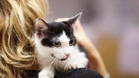 Chybí vám doma spřízněná duše? Pořiďte si čtyřnohou kočku, lásku jich v Praze 6 bude hledat až stovka