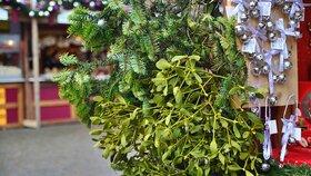 Jmelí – na čem roste a proč ho mít na Vánoce doma?