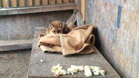 Zpříjemněte zvířátkům v záchranné stanici pobyt: Chystá se soutěž o nejlepšího sběrače