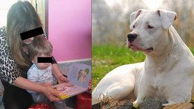 Pes v Přerově zabil malého chlapce (†1): Tragédie rozděluje rodinu