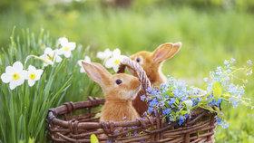 Velikonoční Zelený čtvrtek: Dejte si špenát a nic si nepůjčujte!
