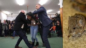 """Volby 2018: Podezřelý balíček, """"nahý útok"""" na Zemana a rejsci u uren"""