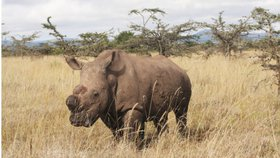 Poslední pocta nosorožci Sudánovi: Celebrita z Dvora Králové má v Keni pomníček
