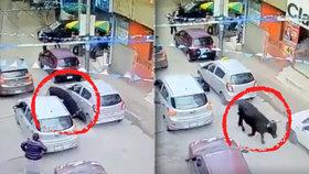 Býk vtrhl do obchodního centra a zranil 8 lidí. Spoušť zachytila kamera