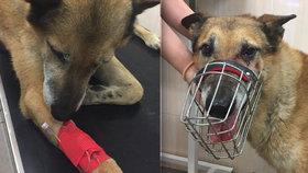 Řidič u Suchdola srazil psa a ujel: Zraněného křížence zachránili svědci nehody, teď pátrají po jeho majiteli