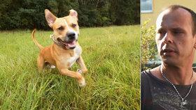 Sourozenecké spory skončily smrtí psa: Veterinář zdravé zvíře utratil