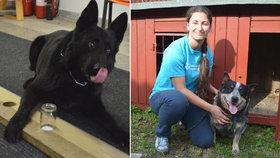 Čeští psi odhalí rakovinu: Mají až 91% úspěšnost