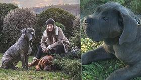 Zpěvačka Anna K. (53): Od rakoviny mi pomohli psi!