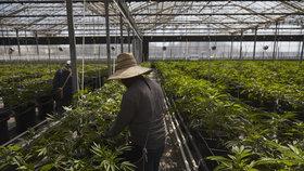Lidi ve vyhlášeném letovisku ničí puch z marihuany. Dusí se a nemůžou větrat