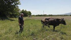 Těhotná kráva se zaběhla mimo EU. Z vůle Bruselu jí hrozí smrt, lidé zuří