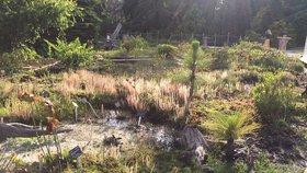 """Horko v botanické zahradě: Některé rostliny oslabuje, kaktusy se cítí jako """"doma"""". Spotřeba vody vzrostla"""