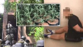 Srb si z vily na Suchdole udělal velkopěstírnu marihuany! Pěstoval ji v 17 stanech