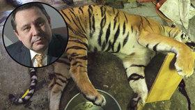 """""""Porcování tygra je prasárna. Pachatelé by měli jít do vězení na 10 let,"""" zuří šéf zoo"""