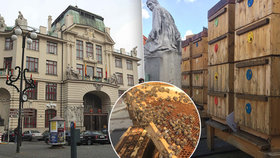 Včelí království na pražském magistrátu: Daří se jim tu lépe než na venkově, říká včelař