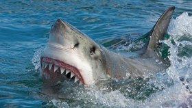 Žraločích útoků přibývá, máme se na dovolené u moře bát? Vědci řekli, jak to je