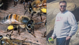 """Před smrtí v horách ho zachránily včely: """"Šly po mně, tak jsem je zabíjel a jedl"""""""