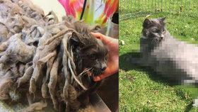 Chlupaté monstrum vyděsilo i otrlé veterináře. Nikdo nevěděl, co se skrývá pod několikakilovou srstí