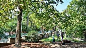 Obnova zeleně na Nuselských schodech? Vinohradští uspěli s peticí, TSK nechá zpracovat studii