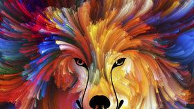 Stačí jeden pohled na obrázek a dozvíte se, jakou máte povahu! Jaké zvíře vidíte?