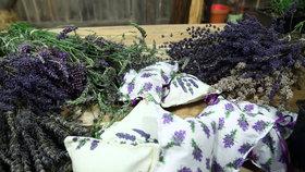 Voňavá levandule: Jak ji vybrat, pěstovat a množit