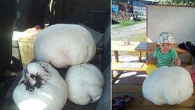 Obří pýchavku ani neuzvedli! Liborek (1) hledal s dědou houby