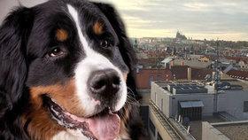 Zaběhl se v Praze pejsek? Pomoc s jeho hledáním má zajistit internetová databáze