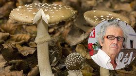 Mykologové varují: Otrav houbami přibývá! Jak se v lese nesplést?