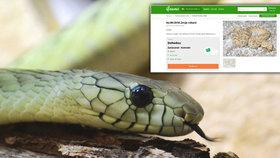 Nebezpečný had k prodeji na inzerát… a nikomu to nevadí! Kde žena k smrtelně jedovaté mambě přišla?