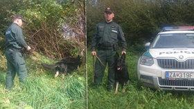 Policejní pes zachránil psychicky labilní ženu: Chtěla spáchat sebevraždu