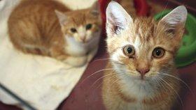Opuštěné kočky čekají v útulcích: Pomůžete nám před Vánoci naplnit jejich misky?