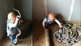 Šokující záběry: Dítě mačká hady a hrabe v jejich klubku!